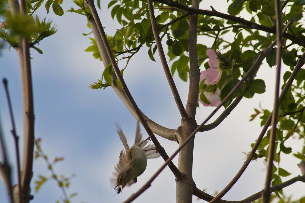 Vogel mit Insekt im Schnabel 2062.1