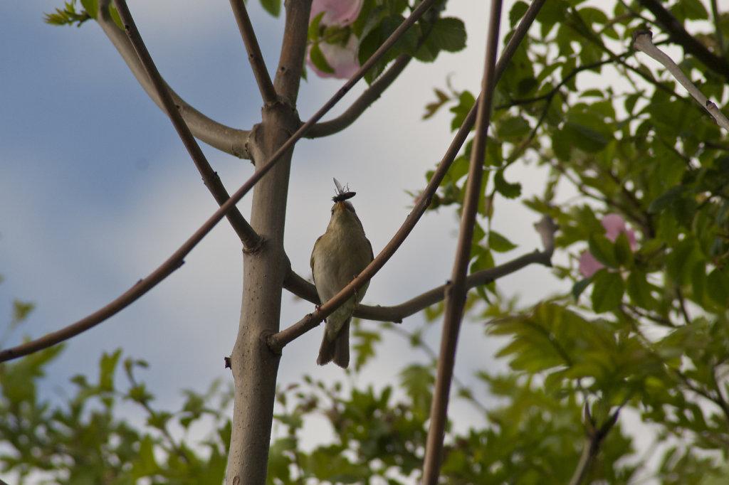 Vogel mit Insekt im Schnabel 2059.1