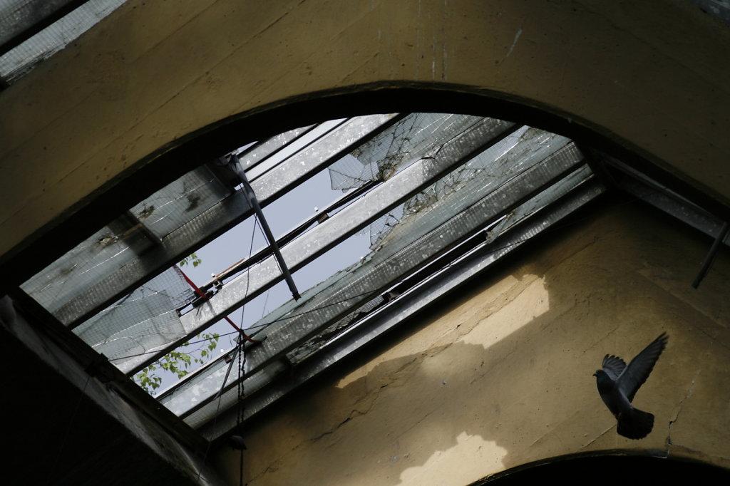 Tauben in der alten VEB Polygraphiemaschinen Fabrik 7786