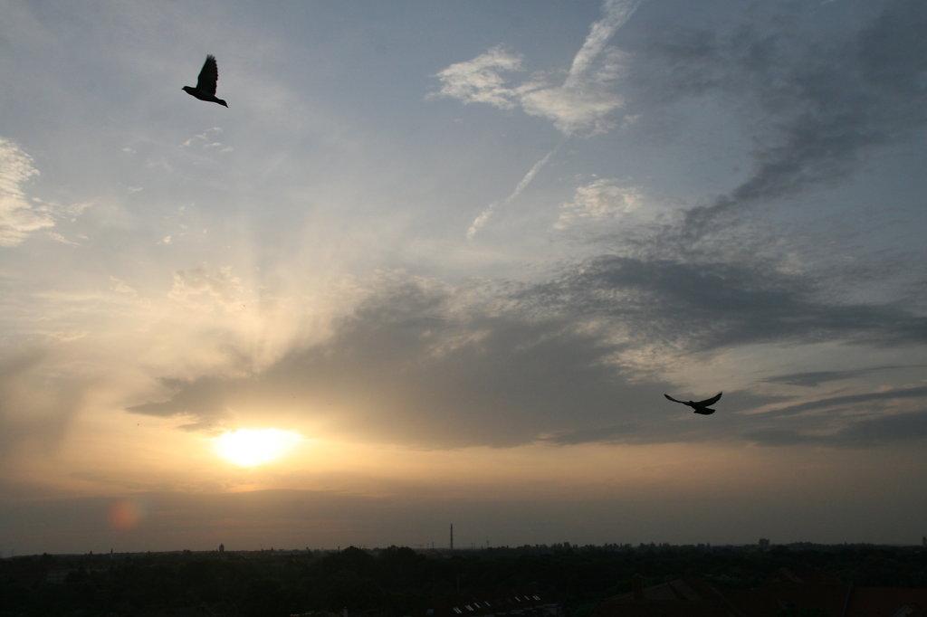 Sonnenaufgang mit Tauben 0107