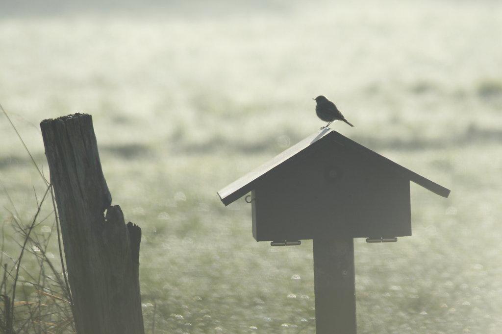 Morgengrauen, Vogelhäuschen mit Vogel  8748
