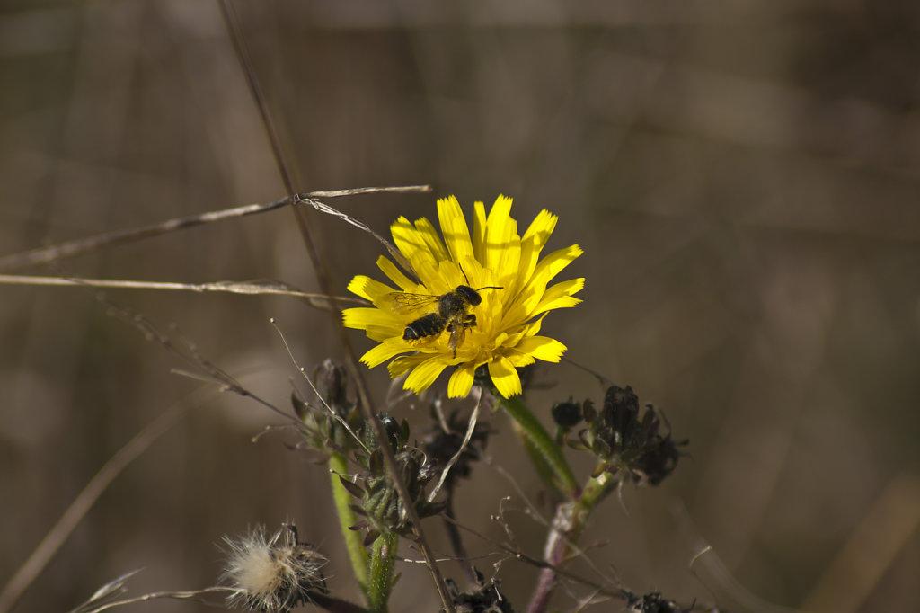Pflaenzchen mit Biene 6609.1