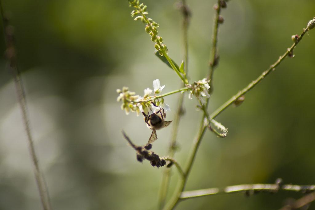 Pflaenzchen mit Biene 6606.1