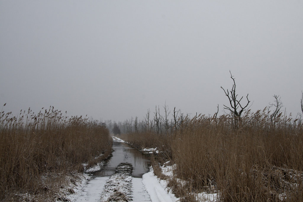 Naturschutzgebiet Anklamer Stadtbruch im Winter Weg nach Kamp 7715.1