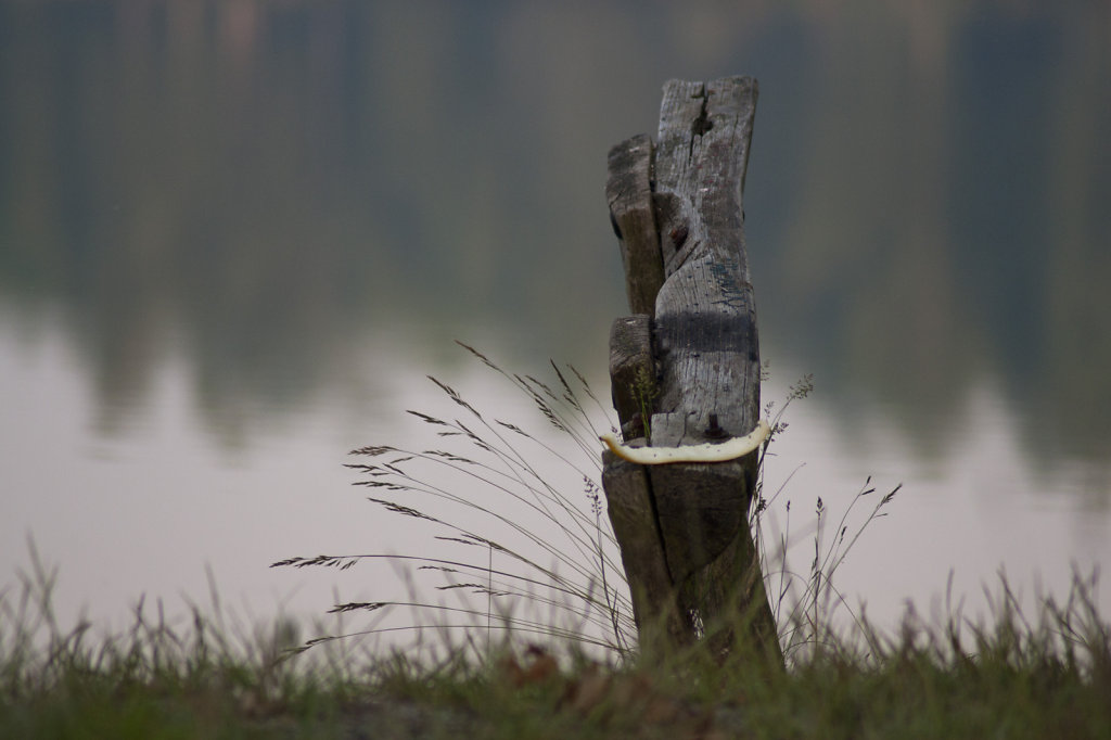 Morgengrauen am See Stillleben Holzphahl Honigmelonenschale Gräser  8283.1