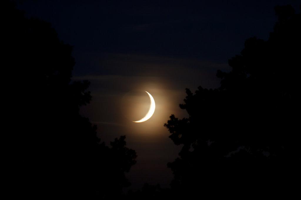Monduntergang zwischen zwei Baeumen 0252.1