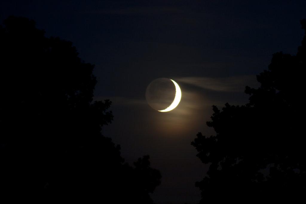Monduntergang zwischen zwei Baeumen 0247.1