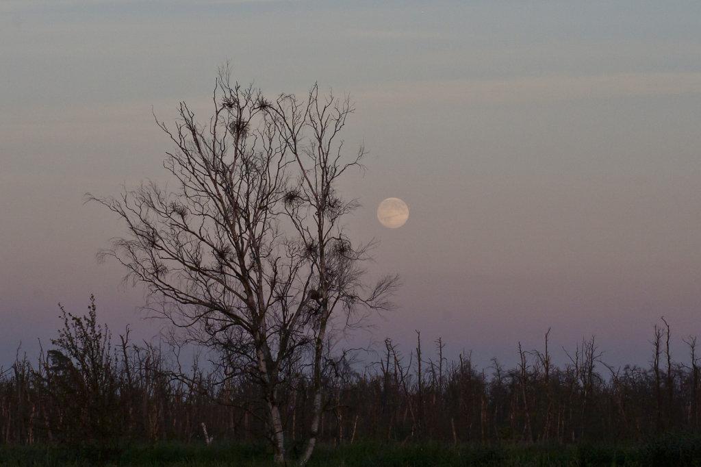 Mondaufgang am 1. August 2012 3915.1